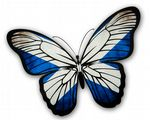 Beautiful Butterfly  With Scotland Scottish Saltire Flag Vinyl Car Sticker 130x90mm